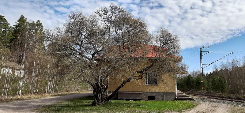 Lehdettömän tuomen takana asemarakennus.  Rakennuksen vasemmalla puolella on puita, joiden takana talo, ja oikealla raiteet. Taustalla metsää.