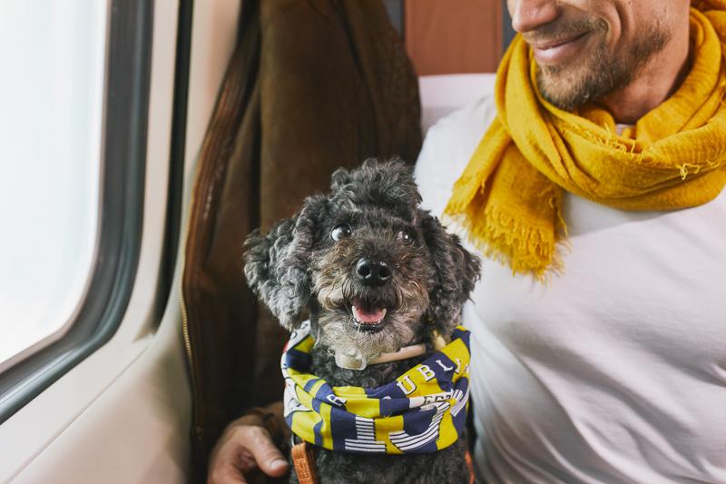 Junassa matkustavan hymyilevän miehen sylissä on pieni harmaa koira.